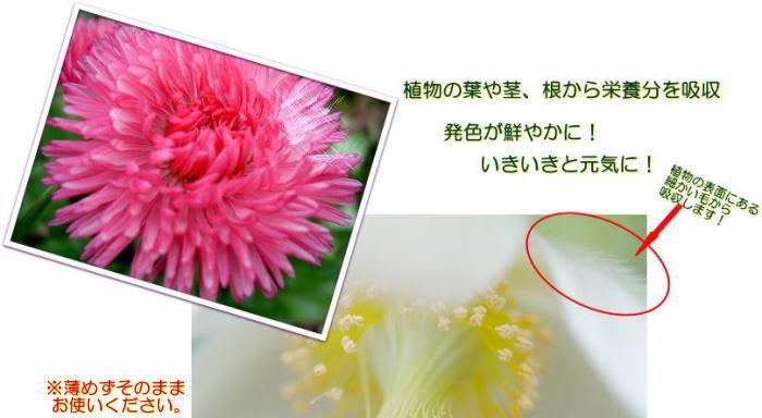花みすと2